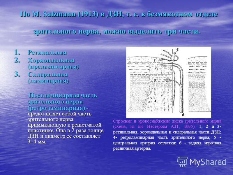 По M. Salzmann (1913) в ДЗН, т. е. в безмякотном отделе зрительного нерва, можно выделить три части. По M. Salzmann (1913) в ДЗН, т. е. в безмякотном отделе зрительного нерва, можно выделить три части. 1. Ретинальная 2. Хориоидальная (преламинарная)