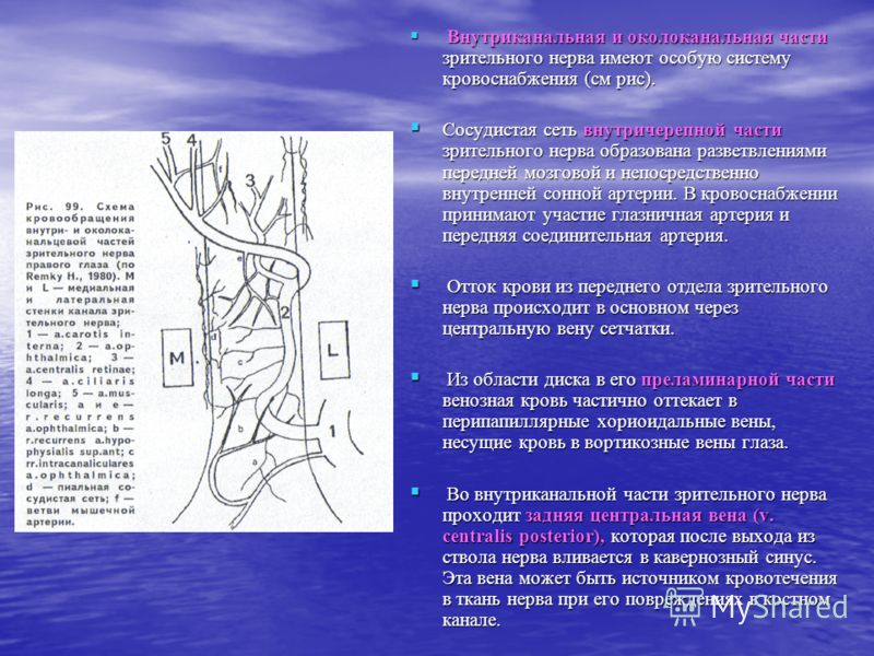Внутриканальная и околоканальная части зрительного нерва имеют особую систему кровоснабжения (см рис). Внутриканальная и околоканальная части зрительного нерва имеют особую систему кровоснабжения (см рис). Сосудистая сеть внутричерепной части зритель