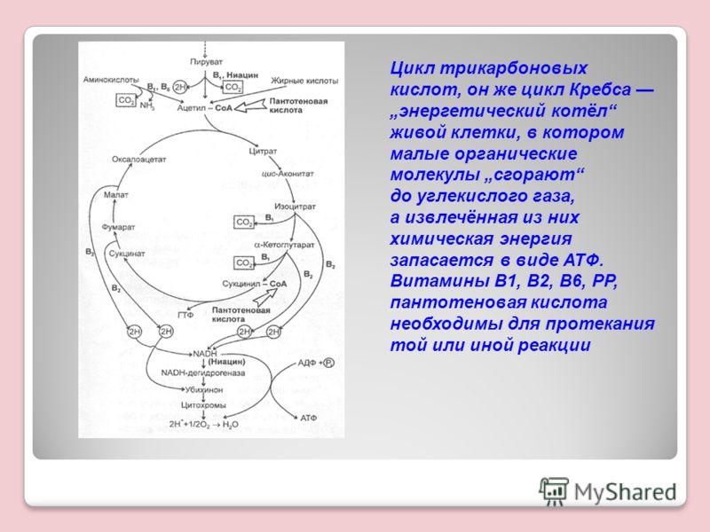 Цикл трикарбоновых кислот, он же цикл Кребса энергетический котёл живой клетки, в котором малые органические молекулы сгорают до углекислого газа, а извлечённая из них химическая энергия запасается в виде АТФ. Витамины В1, В2, В6, РР, пантотеновая ки