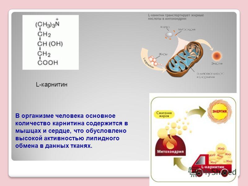 L-карнитин В организме человека основное количество карнитина содержится в мышцах и сердце, что обусловлено высокой активностью липидного обмена в данных тканях.