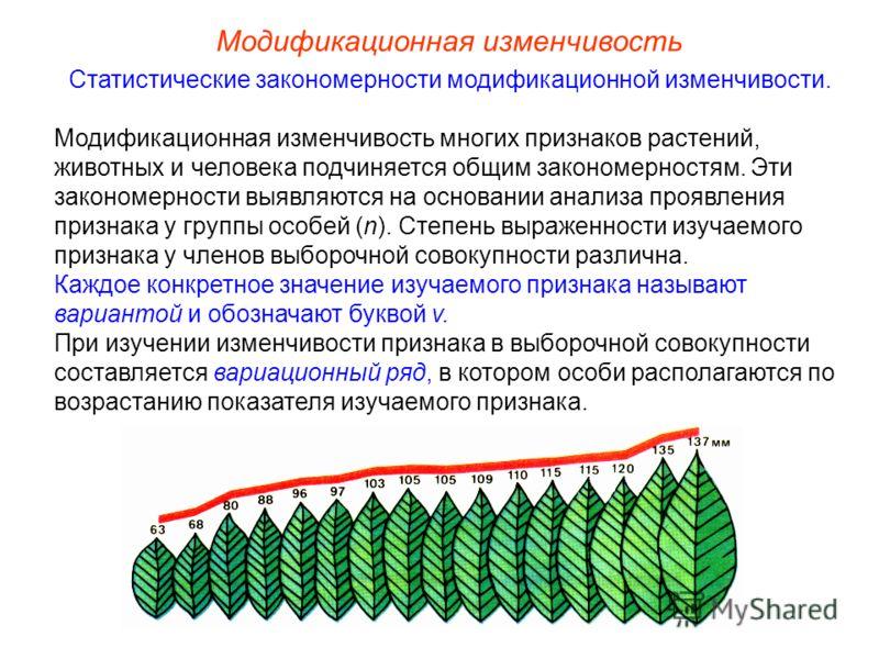 Модификационная изменчивость Статистические закономерности модификационной изменчивости. Модификационная изменчивость многих признаков растений, животных и человека подчиняется общим закономерностям. Эти закономерности выявляются на основании анализа