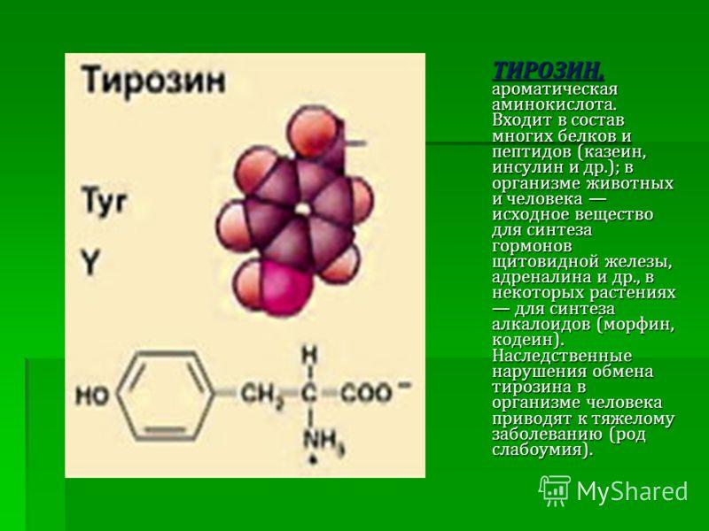 ТИРОЗИН, ароматическая аминокислота. Входит в состав многих белков и пептидов (казеин, инсулин и др.); в организме животных и человека исходное вещество для синтеза гормонов щитовидной железы, адреналина и др., в некоторых растениях для синтеза алкал