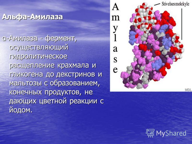 Альфа-Амилаза α-Амилаза - фермент, осуществляющий гидролитическое расщепление крахмала и гликогена до декстринов и мальтозы с образованием, конечных продуктов, не дающих цветной реакции с йодом.
