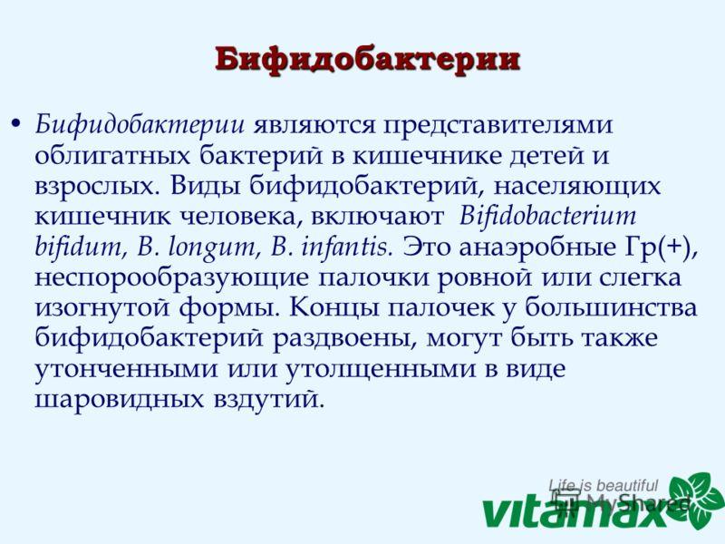 Бифидобактерии Бифидобактерии являются представителями облигатных бактерий в кишечнике детей и взрослых. Виды бифидобактерий, населяющих кишечник человека, включают Bifidobacterium bifidum, В. longum, В. infantis. Это анаэробные Гр(+), неспорообразую