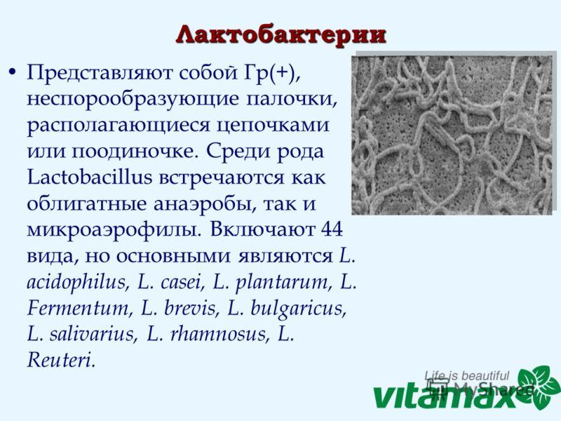 Лактобактерии Представляют собой Гр(+), неспорообразующие палочки, располагающиеся цепочками или поодиночке. Среди рода Lactobacillus встречаются как облигатные анаэробы, так и микроаэрофилы. Включают 44 вида, но основными являются L. acidophilus, L.