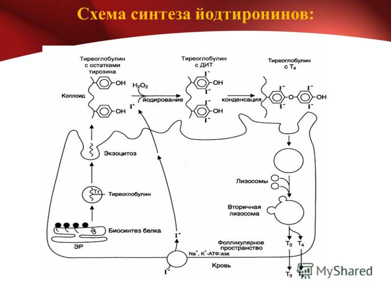Схема синтеза йодтиронинов:
