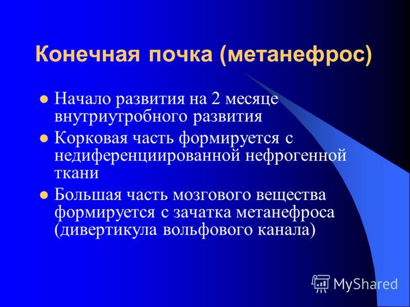 Конечная почка (метанефрос) Начало развития на 2 месяце внутриутробного развития Корковая часть формируется с недиференциированной нефрогенной ткани Большая часть мозгового вещества формируется с зачатка метанефроса (дивертикула вольфового канала)