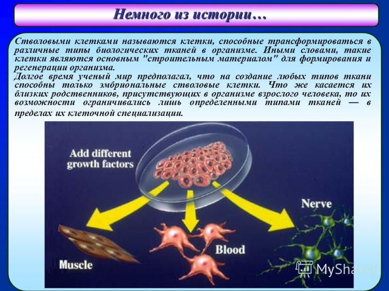 Немного из истории… Стволовыми клетками называются клетки, способные трансформироваться в различные типы биологических тканей в организме. Иными словами, такие клетки являются основным