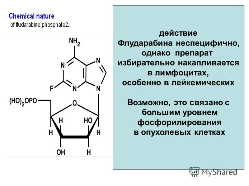 действие Флударабина неспецифично, однако препарат избирательно накапливается в лимфоцитах, особенно в лейкемических Возможно, это связано с большим уровнем фосфорилирования в опухолевых клетках