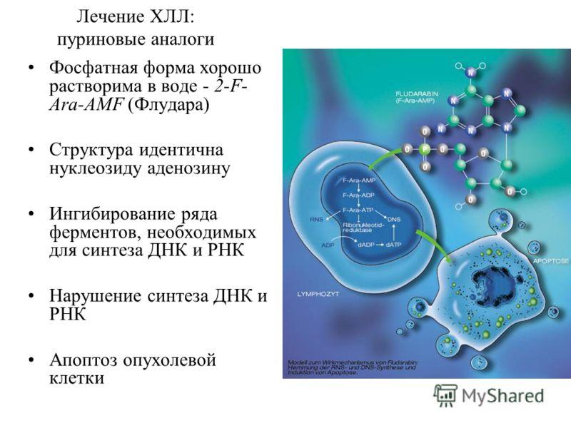 Лечение ХЛЛ: пуриновые аналоги Фосфатная форма хорошо растворима в воде - 2-F- Ara-AMF (Флудара) Структура идентична нуклеозиду аденозину Ингибирование ряда ферментов, необходимых для синтеза ДНК и РНК Нарушение синтеза ДНК и РНК Апоптоз опухолевой к
