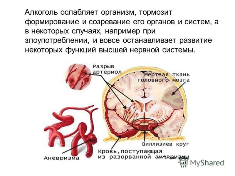 Алкоголь ослабляет организм, тормозит формирование и созревание его органов и систем, а в некоторых случаях, например при злоупотреблении, и вовсе останавливает развитие некоторых функций высшей нервной системы.