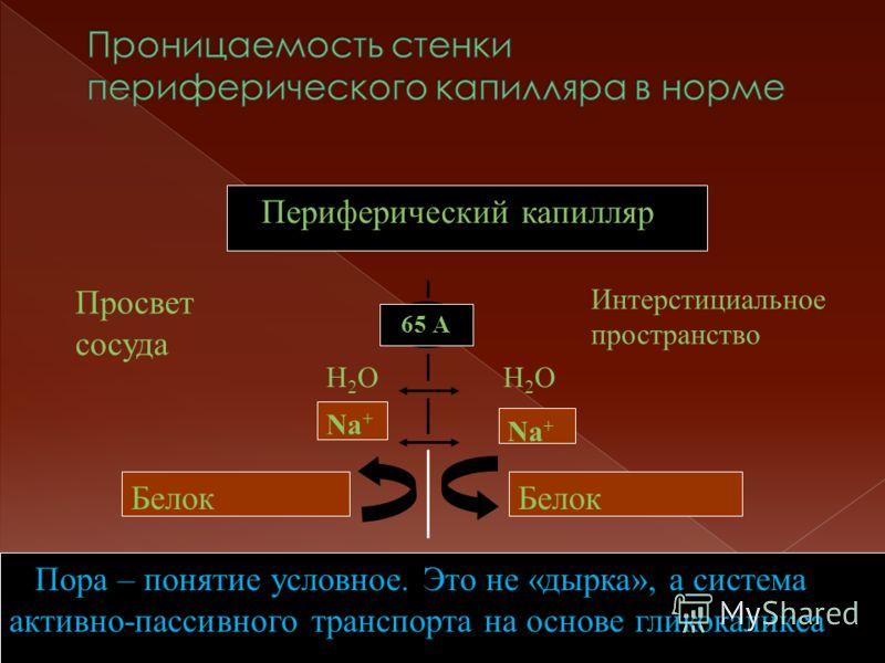 Периферический капилляр 65 А Просвет сосуда Интерстициальное пространство Na + Белок Н2ОН2ОН2ОН2О Na + Белок Пора – понятие условное. Это не «дырка», а система активно-пассивного транспорта на основе гликокаликса