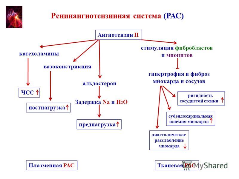 Ренинангиотензинная система (РАС) катехоламины вазоконстрикция альдостерон Задержка Na и H 2 О ЧСС постнагрузка преднагрузка Плазменная РАС стимуляция фибробластов и миоцитов Тканевая РАС ригидность сосудистой стенки субэндокардиальная ишемия миокард