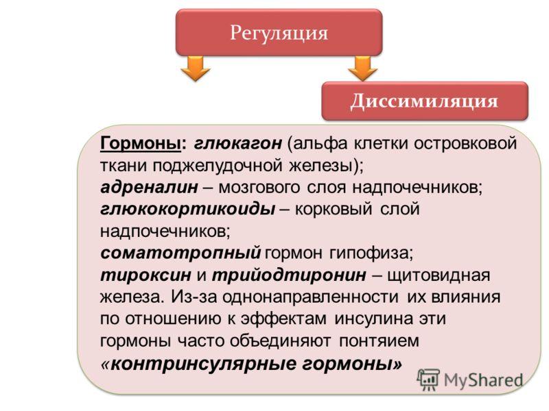 Регуляция Диссимиляция Гормоны: глюкагон (альфа клетки островковой ткани поджелудочной железы); адреналин – мозгового слоя надпочечников; глюкокортикоиды – корковый слой надпочечников; соматотропный гормон гипофиза; тироксин и трийодтиронин – щитовид