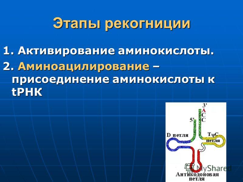 Этапы рекогниции 1. Активирование аминокислоты. 2. Аминоацилирование – присоединение аминокислоты к tРНК