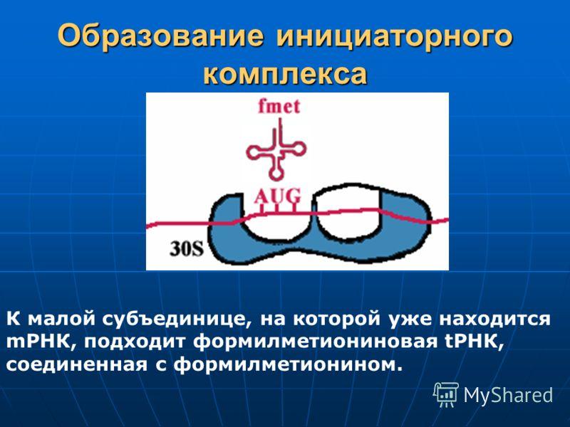 Образование инициаторного комплекса К малой субъединице, на которой уже находится mРНК, подходит формилметиониновая tРНК, соединенная с формилметионином.