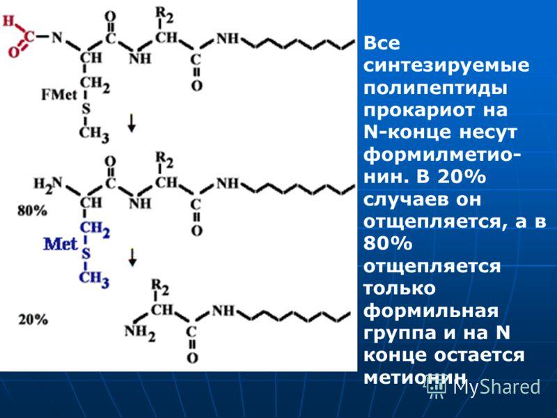Все синтезируемые полипептиды прокариот на N-конце несут формилметио- нин. В 20% случаев он отщепляется, а в 80% отщепляется только формильная группа и на N конце остается метионин