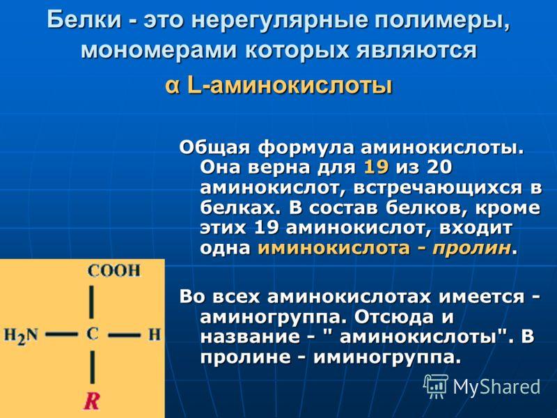 Белки - это нерегулярные полимеры, мономерами которых являются α L-аминокислоты Общая формула аминокислоты. Она верна для 19 из 20 аминокислот, встречающихся в белках. В состав белков, кроме этих 19 аминокислот, входит одна иминокислота - пролин. Во
