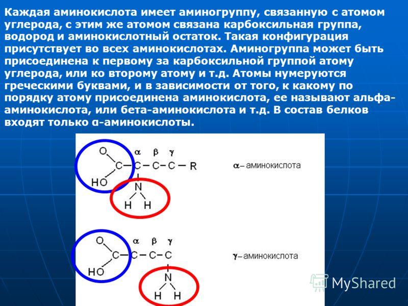 Каждая аминокислота имеет аминогруппу, связанную с атомом углерода, с этим же атомом связана карбоксильная группа, водород и аминокислотный остаток. Такая конфигурация присутствует во всех аминокислотах. Аминогруппа может быть присоединена к первому