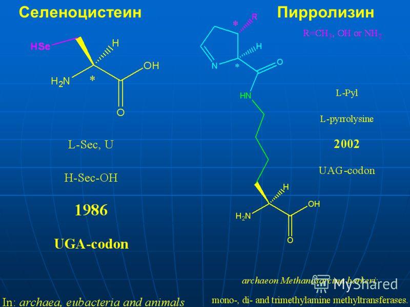 СеленоцистеинПирролизин