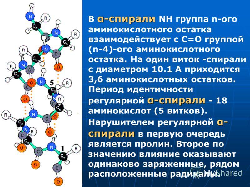 α-спирали α-спирали α- спирали В α-спирали NH группа n-ого аминокислотного остатка взаимодействует с С=О группой (n-4)-ого аминокислотного остатка. На один виток -спирали с диаметром 10.1 A приходится 3,6 аминокислотных остатков. Период идентичности