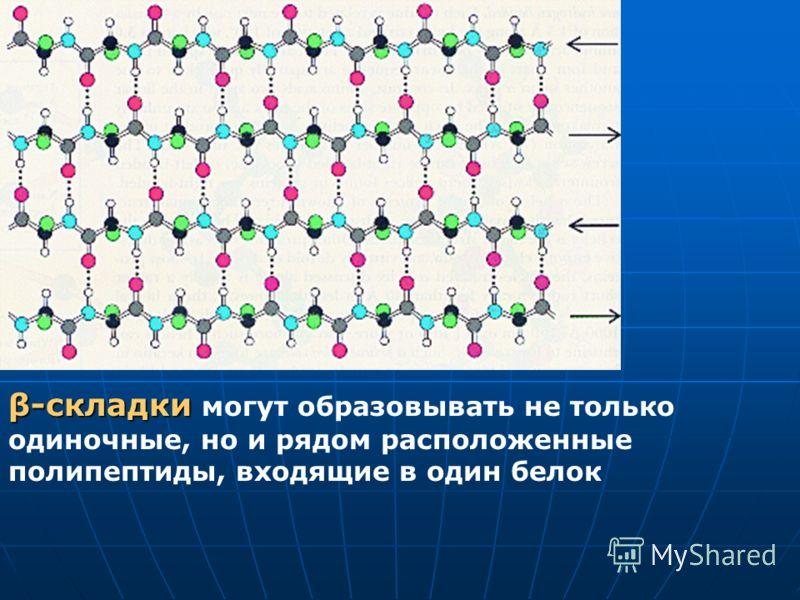 β-складки β-складки могут образовывать не только одиночные, но и рядом расположенные полипептиды, входящие в один белок