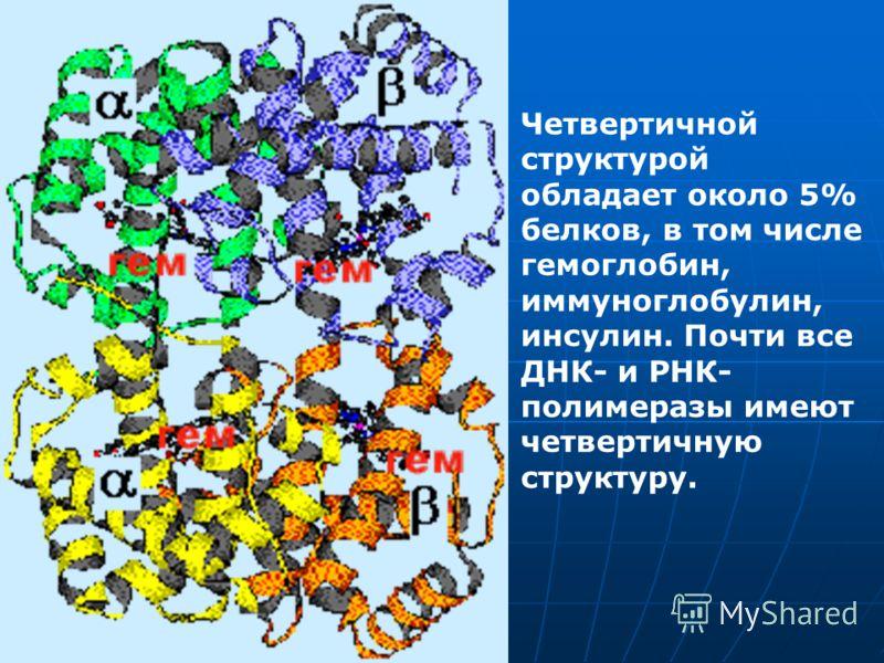 Четвертичной структурой обладает около 5% белков, в том числе гемоглобин, иммуноглобулин, инсулин. Почти все ДНК- и РНК- полимеразы имеют четвертичную структуру.