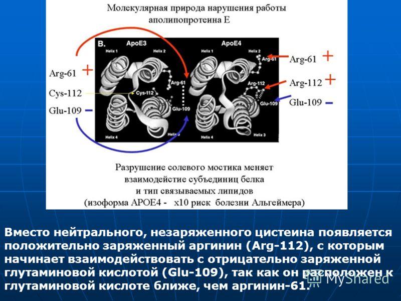 Вместо нейтрального, незаряженного цистеина появляется положительно заряженный аргинин (Arg-112), с которым начинает взаимодействовать с отрицательно заряженной глутаминовой кислотой (Glu-109), так как он расположен к глутаминовой кислоте ближе, чем