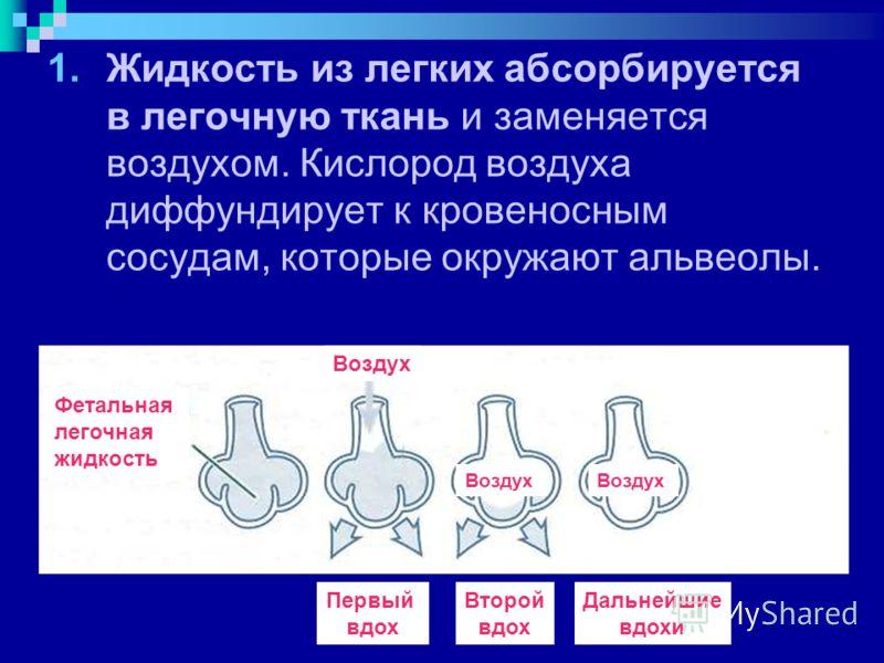 1.Жидкость из легких абсорбируется в легочную ткань и заменяется воздухом. Кислород воздуха диффундирует к кровеносным сосудам, которые окружают альвеолы. Воздух Фетальная легочная жидкость Первый вдох Второй вдох Дальнейшие вдохи