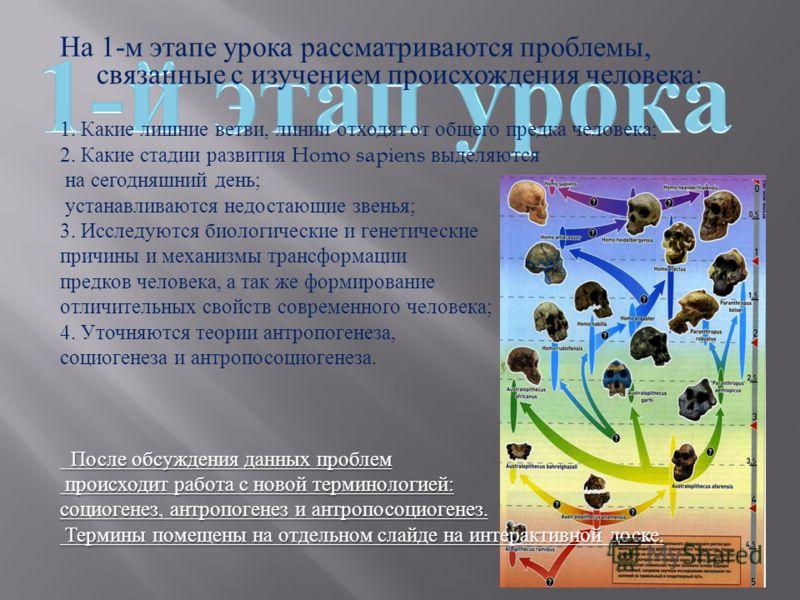 На 1- м этапе урока рассматриваются проблемы, связанные с изучением происхождения человека : 1. Какие лишние ветви, линии отходят от общего предка человека ; 2. Какие стадии развития Homo sapiens выделяются на сегодняшний день ; устанавливаются недос