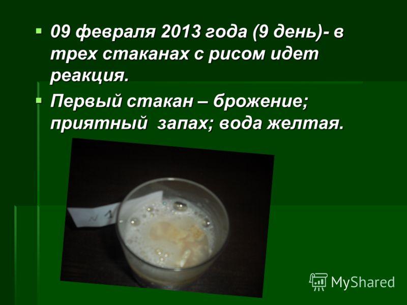 09 февраля 2013 года (9 день)- в трех стаканах с рисом идет реакция. Первый стакан – брожение; приятный запах; вода желтая.