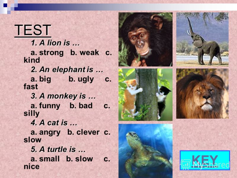 TEST 1. A lion is … a. strong b. weak c. kind 2. An elephant is … a. big b. ugly c. fast 3.A monkey is … 3. A monkey is … a. funny b. bad c. silly 4.A cat is … 4. A cat is … a. angry b. clever c. slow 5.A turtle is … 5. A turtle is … a. small b. slow