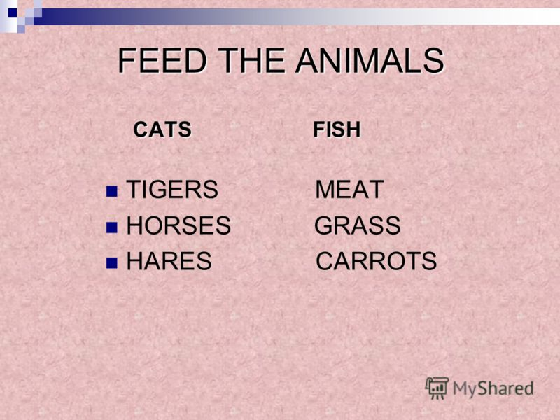 FEED THE ANIMALS CATS FISH TIGERS MEAT HORSES GRASS HARES CARROTS