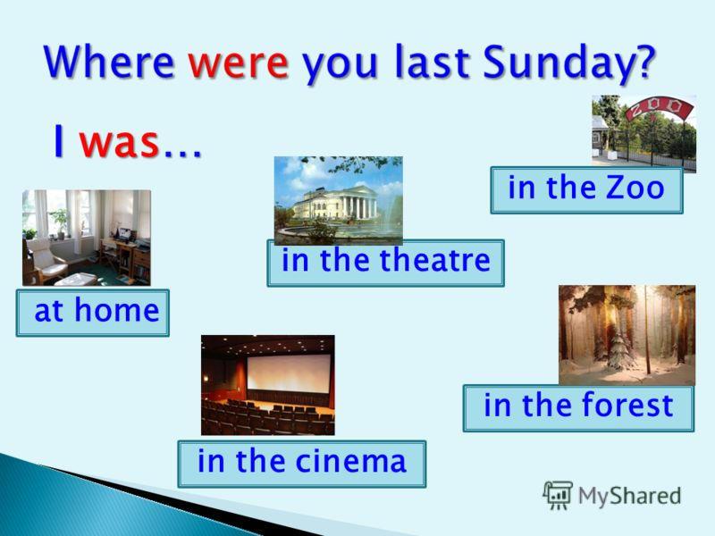 I was… in the Zoo in the forest in the cinema at home in the theatre