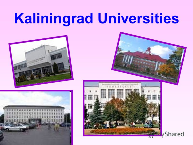 Kaliningrad Universities