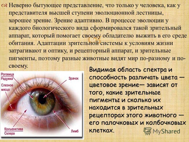 Неверно бытующее представление, что только у человека, как у представителя высшей ступени эволюционной лестницы, хорошее зрение. Зрение адаптивно. В процессе эволюции у каждого биологического вида сформировался такой зрительный аппарат, который помог