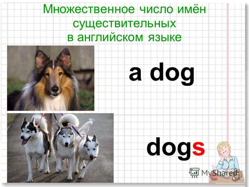 Множественное число имён существительных в английском языке dogs a dog