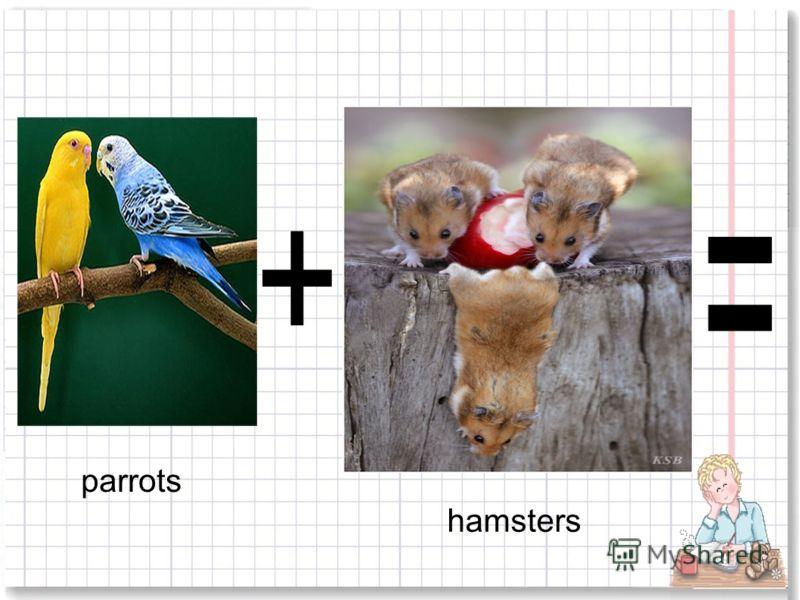 parrots hamsters