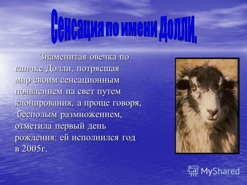 Знаменитая овечка по кличке Долли, потрясшая мир своим сенсационным появлением на свет путем клонирования, а проще говоря, бесполым размножением, бесполым размножением, отметила первый день рождения: ей исполнился год в 2005г.