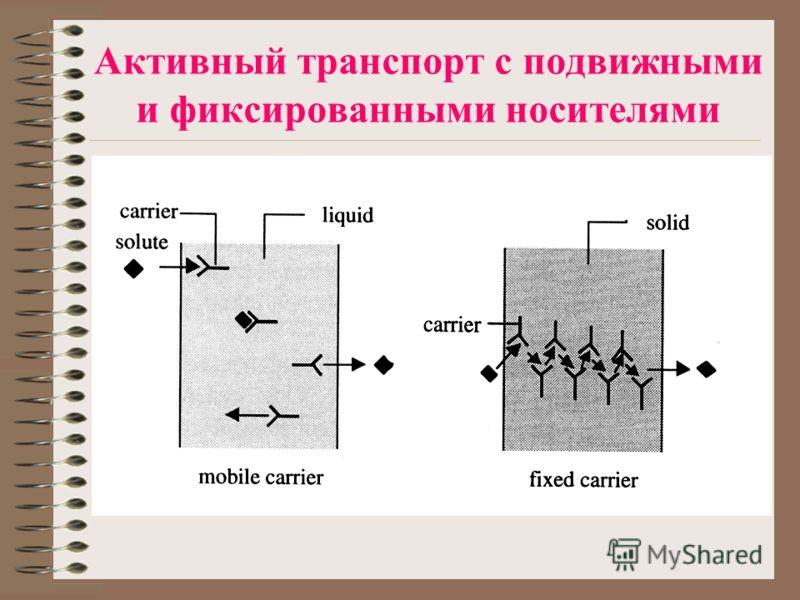 Активный транспорт с подвижными и фиксированными носителями