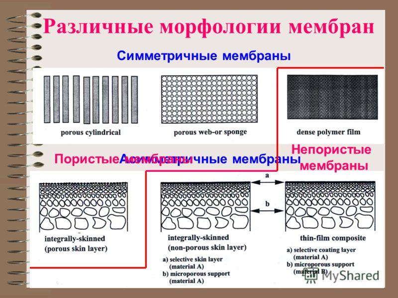 Различные морфологии мембран Асимметричные мембраны Симметричные мембраны Пористые мембраны Непористые мембраны