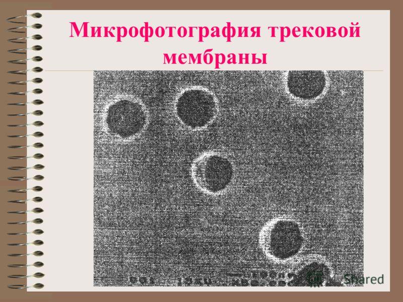 Микрофотография трековой мембраны