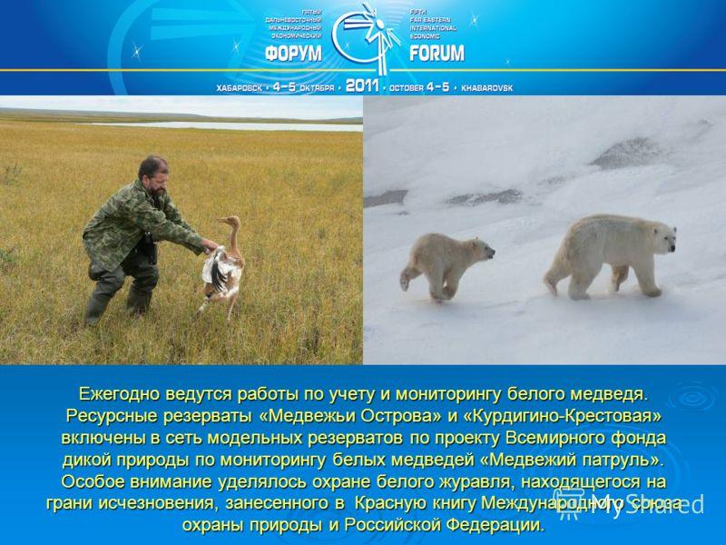 Ежегодно ведутся работы по учету и мониторингу белого медведя. Ресурсные резерваты «Медвежьи Острова» и «Курдигино-Крестовая» включены в сеть модельных резерватов по проекту Всемирного фонда дикой природы по мониторингу белых медведей «Медвежий патру