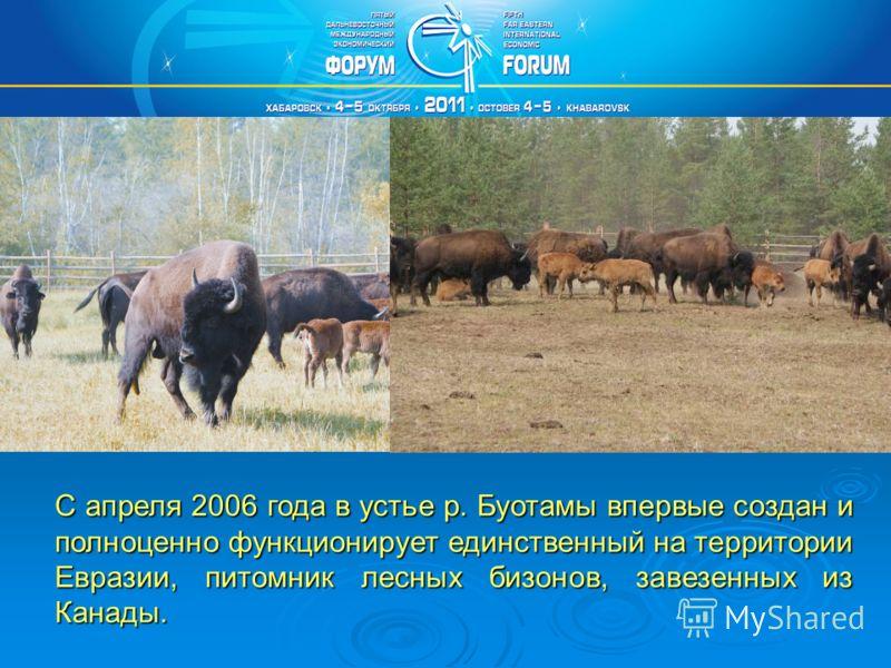 С апреля 2006 года в устье р. Буотамы впервые создан и полноценно функционирует единственный на территории Евразии, питомник лесных бизонов, завезенных из Канады.
