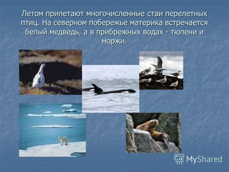 Летом прилетают многочисленные стаи перелетных птиц. На северном побережье материка встречается белый медведь, а в прибрежных водах - тюлени и моржи.