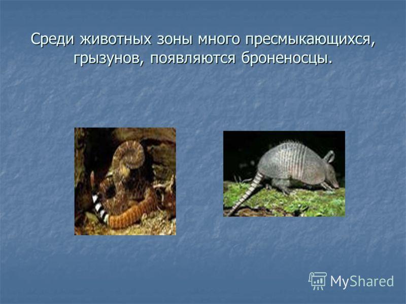Среди животных зоны много пресмыкающихся, грызунов, появляются броненосцы.