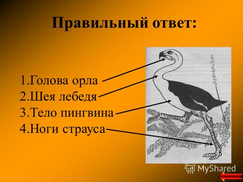 Правильный ответ: 1.Голова орла 2.Шея лебедя 3.Тело пингвина 4.Ноги страуса