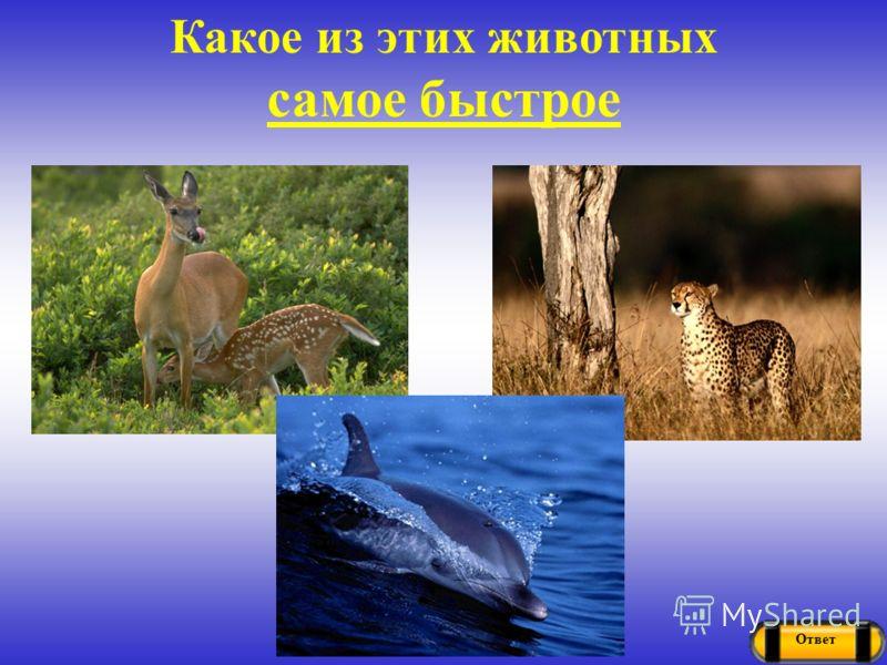 Ответ Какое из этих животных самое быстрое