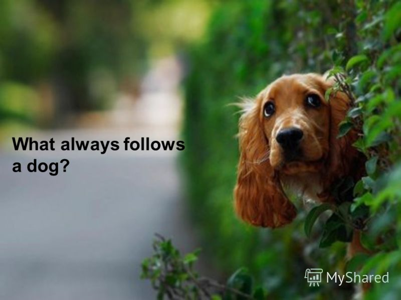 What always follows a dog?
