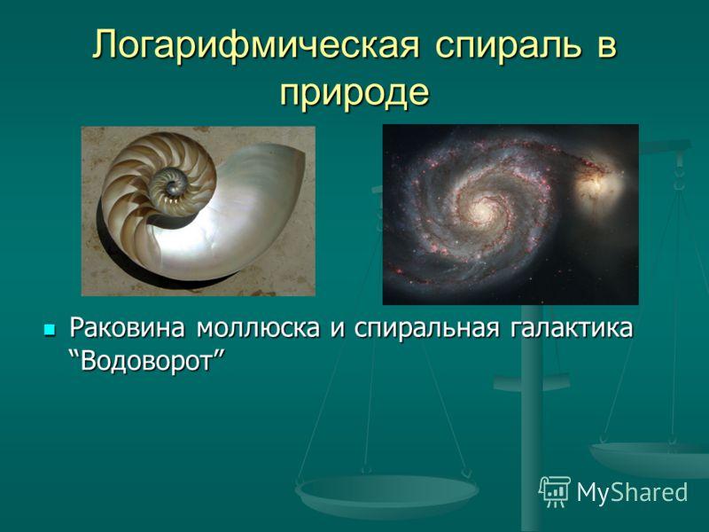 Логарифмическая спираль в природе Раковина моллюска и спиральная галактикаВодоворот